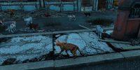 Разнообразные кошки Моды для Fallout 4 / Фоллаут 4